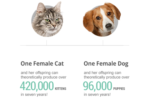 impact of spay and neuter