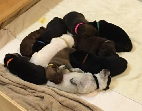 11-4 another puppy pile (2)